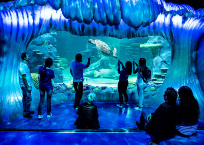 16-Syd Aquarium-Giant Wave into Great Barrier Reef Tank 02